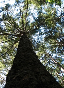 tree_crop