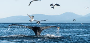 Racerockswhale